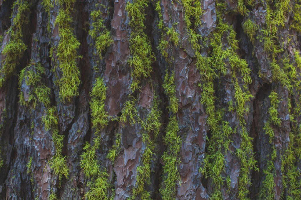 Jak usunąć mech z drewna