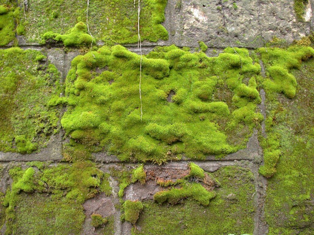 Jak usunąć mech z betonu?